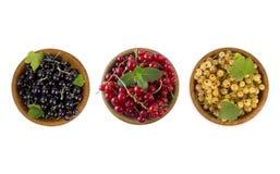 Satz verschiedene Farbkorinthen lokalisiert auf dem weißen Hintergrund herausgeschnitten Weiße, rote und Schwarze Johannisbeere i Stockfotos