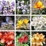 Satz verschiedene Frühlingsblumen Stockfotos
