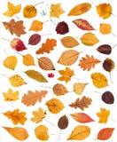 Satz verschiedene getrocknete Herbst gefallene Blätter lokalisiert Lizenzfreies Stockbild