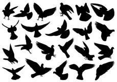 Satz verschiedene Tauben Stockfotografie