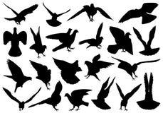 Satz verschiedene Tauben Stockbild