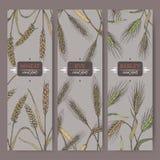 Satz von drei Aufklebern mit Brotweizen, Roggen und Gerste färben Skizze Getreide pflanzt Sammlung vektor abbildung