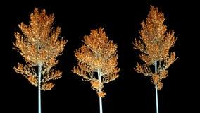 Satz von drei silbernen Bäumen mit Gold verlässt 3d übertragen Lokalisierter, schwarzer Hintergrund lizenzfreie abbildung