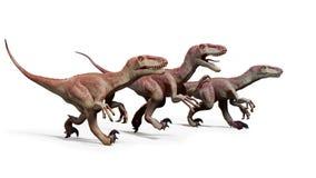 Satz von Dromaeosaurs, Theropoddinosaurier jagend, Illustration 3d lokalisiert auf weißem Hintergrund Lizenzfreies Stockfoto