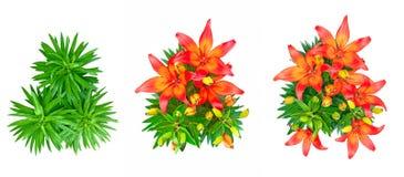 Satz von 3 lokalisierte rote Lilienblumen Stockfoto