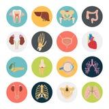 Satz von sechzehn menschlichen Organen und anatomische Teile färben flache Ikonen Lizenzfreies Stockfoto