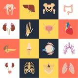 Satz von sechzehn menschlichen Organen und anatomische Teile färben flache Ikonen Stockfotografie