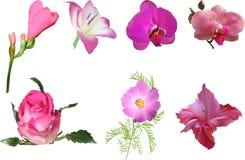 Satz von sieben rosa Blumen lokalisiert auf Weiß vektor abbildung
