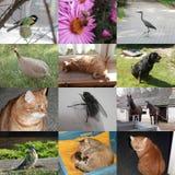 Satz von 12 Tierfotos Lizenzfreie Stockfotos