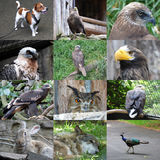 Satz von 12 Tierfotos Stockfotografie