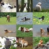 Satz von 12 Tierfotos Stockbild