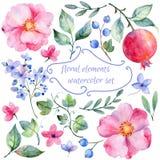 Satz von unterschiedlichen roten rosa Blumen und von Granatapfel für Design Lizenzfreies Stockfoto