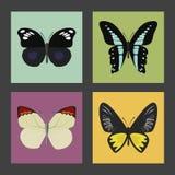 Satz von vier Farbflachen Schmetterlingsikonen Lizenzfreie Stockfotos