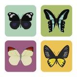 Satz von vier Farbflachen Schmetterlingsikonen Stockfotos