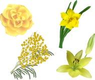 Satz von vier gelben Blumen lokalisiert auf Weiß Lizenzfreie Stockbilder