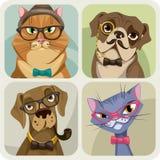 Satz von vier Porträts von den Hunden und von Katzen, die Hippie-Zubehör tragen Stockfotografie
