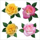Satz von vier Rosen Stockbilder
