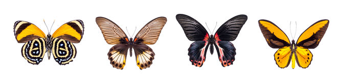 Satz von vier schön und von bunten Schmetterlingen Stockfotografie