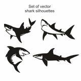 Satz von vier Vektorhaifischschattenbildern lokalisiert auf weißem Hintergrund, Symbole, Ikone, Gestaltungselemente lizenzfreie abbildung