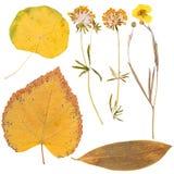Satz von wildem trocknen gepresste Blumen und Blätter Lizenzfreie Stockfotos