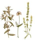 Satz von wildem trocknen gepresste Blumen und Blätter Stockbilder