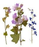 Satz von wildem trocknen gepresste Blumen und Blätter Stockbild