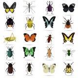 Satz von zwanzig Farbflachen Insektenikonen Lizenzfreie Stockfotografie