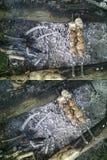 Satz von zwei Hintergründen mit Fleisch auf Aufsteckspindeln über einem Lagerfeuer im Freien Stockbild