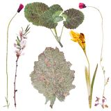 Satz wilde Blumen gedrückt Stockbilder