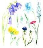 Satz wilde Blumen: Glockenblumen, Veilchen, vergessen-ich, Kornblume vektor abbildung