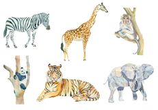 Satz wilde Tiere des Aquarells lizenzfreie abbildung