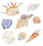 Satz wilde Tiere des Aquarells Stockbild