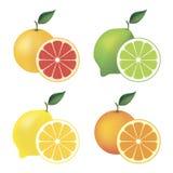 Satz Zitrusfrucht Stockfoto