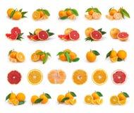 Satz Zitrusfrucht lokalisiert auf weißem Hintergrund Lizenzfreie Stockfotos