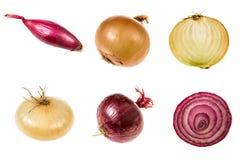 Satz Zwiebeln von verschiedenen Qualitäten lizenzfreies stockbild