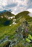 Saua caprei peak of Fagarasan mountains. Gorgeous summer landscape of Southern Carpathians in Romania royalty free stock photo