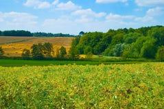 Saubohne-Landschaft Stockfotos