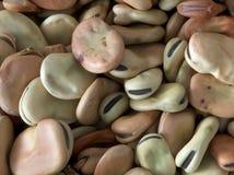 Saubohnen stockfoto