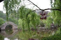 sauce de la isla de Junshan en el lago Dongting Foto de archivo