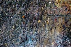 Sauce en el río con el petirrojo Fotos de archivo libres de regalías