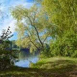 Sauce en el río en otoño temprano Imagen de archivo libre de regalías