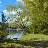 Sauce en el río en otoño temprano Foto de archivo