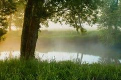 Sauce en el río por mañana Fotografía de archivo