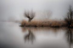 Sauce en niebla Imagen de archivo libre de regalías