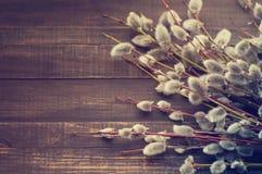 Sauce floreciente Ramas del sauce con los riñones mullidos Imagen de archivo