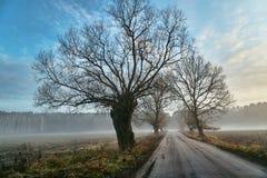 Sauce por el camino de tierra y la niebla cerca del bosque Fotos de archivo