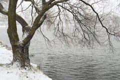 Sauce por invierno fotografía de archivo libre de regalías