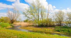 Sauce y arbustos de florecimiento en los bancos de un río Fotos de archivo