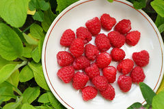 Saucer with raspberries Royalty Free Stock Photo