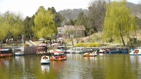 Sauces densos por el lago chispeante, barcos de cruceros de los turistas en el agua almacen de metraje de vídeo